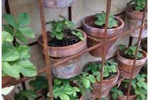 Jordbærplanter i riconet
