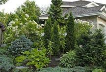 Zahrada jehlicnany
