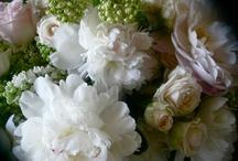 Wedding Flowers / by Renee Jones