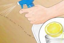 spray per formiche