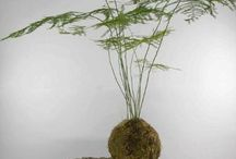 Hobby Plants