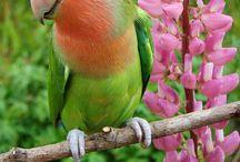PARROTS & BIRDS