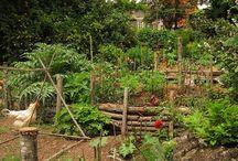Trädgård / Inspiration