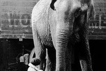 Gitrls and Elephants