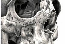 GCSE Skulls