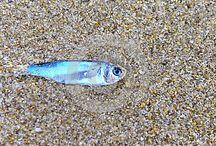 Marine Life / Images of marine life, shells