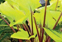Bold garden leaf colours