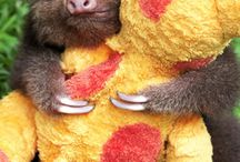 SLOTHS / I love sloths soooooo much, I wish I had one so bad