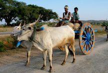 photographs India