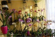 Mis plantas y flores