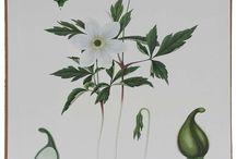 Växter old school