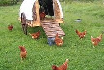 Farmyard Ideas
