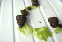 Hungry Snails