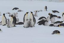 ★ Penguins ★