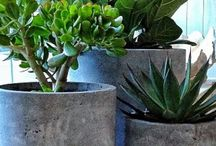 Decorating: Planters