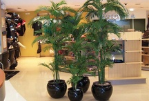 Artificial Indoor Plants