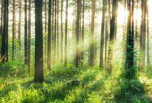 Zolder ideetjes bos
