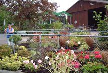 Gartentreume / Meine Ideen