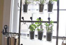 Indoor Gardening / Indoor garden inspiration and tips.