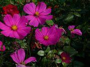 Kertek-virágok