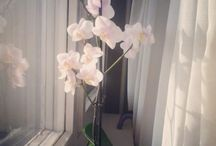 Orchids / Mine and other beauties from the internet. I'll mark mine clearly. (She is called Natasa. :))