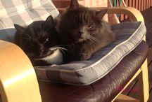 My Cats / Kissojen elämää