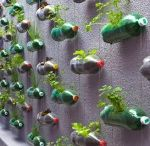 bouteilles jardinière