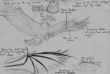 Body parts - Wings