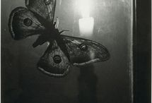 The Lesson of the Moth