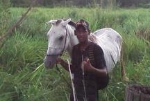Minha Égua