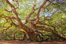 Cool Trees / Collection of interesting and noteworthy trees