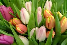 BECOME BLOOM SAVVY! / Discover new floral varieties, or rediscover old favorites
