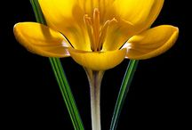 The significant of a flower  / by Karen Vazquez