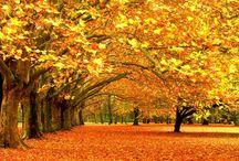 Autumn! / Oh herfst wat ben je altijd mooi!