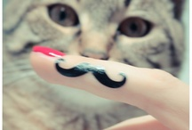 Moustaches & Matous