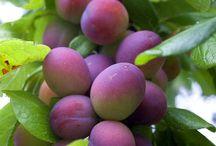 Erik&plums