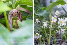 Schattenlieblinge / Pflanzen für den Schatten
