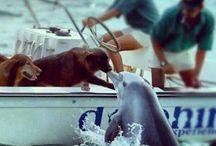 Delfiinit