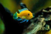 Aquarium beauties