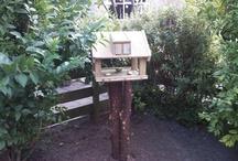 vogel huis jes