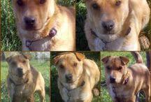 Kutya örökbefogadás - Hajdúszoboszlói Kutyabarátok Egyesület