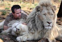 KEVIN LION MAN