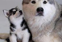 Cachorrinhos fofíssimos!