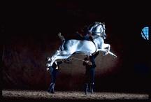 L'Ecole d'Art Equestre de Jerez / Fundación Real Escuela Andaluza del Arte Ecuestre