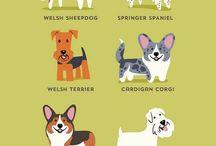Fajne rzeczy związane z psami