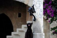 Chat - Cat - Katze (Fluide/Fluid/Flüssigkeit) / by Lea Fox