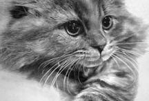 Кошки, просто кошки!