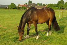 Paarden :) / Natuurlijk mogen paarde!n niet ontbreken op mijn Pinterest