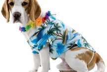 Luau Party! / You don't have to be in Hawaii to have a Luau!