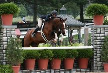 Kentucky Horse Show LLC / by Phelps Media Group